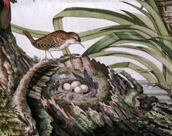 "Digital Download from Original Antique Bird & Nest Engraving by Nozeman  date 1780 High Resolution 8 1/2"" X 11"""