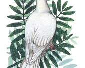 Peace Dove - Original Watercolor Painting (matted)