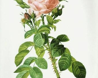 Leheur's Rose art print vintage antique wall art pink flower art print Victorian art print antique rose art rose print prints 102