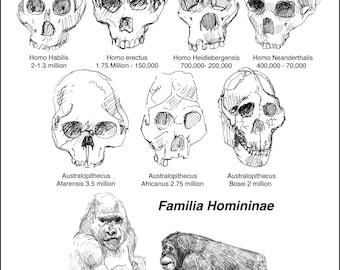 Evolution of humankind science skulls of ancestors pen and ink giclee art print size 8.5x11 Anthropology, Evolution artwork