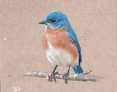 "Bluebird 8x8"" print"
