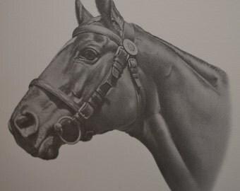 1969 Joseph V. Petro Man O' War Framed Signed #84 Proof of 1954 Dwight Eisenhower Equine Bluegrass Winner Horse Kentucky Derby Triple Crown