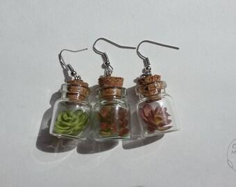 Mini Succulent Terrarium Earrings - 3 Colours