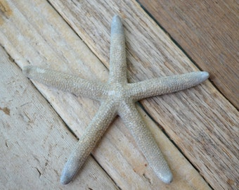 "Natural Blue Starfish, Finger Starfish, Pencil Starfish (3-4"") 