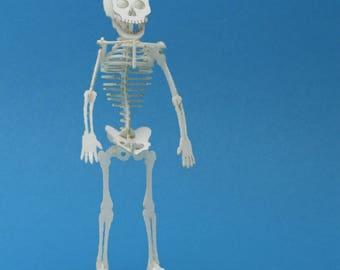 Tiny Human Skeleton Bare Bones - Paper Puzzle Sculpture Tiny Model