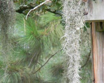 "Digital Download ""Spanish Moss Covered Birdhouse"""