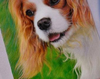 Charles spaniel drawing/Original dog colored pencils drawing print/Charles spaniel drawing/Spaniel portrait print/Dog print 8x10/Pet print