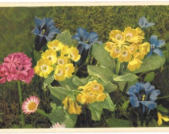 Gentiana Clusii, by Thor E. Gyger, Adelboden, Vintage Used Postcard, 1948,  Switzerland #2366.