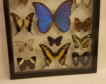 Black framed buttrflies