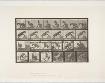 16x24 Poster; Horse Denver, Miscellaneous Performances Rbm Qp301M8 1887 660