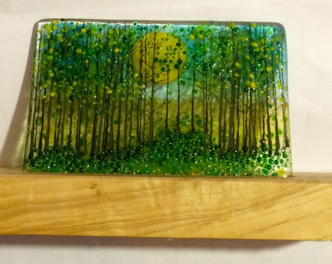 Sunshine woods on yew