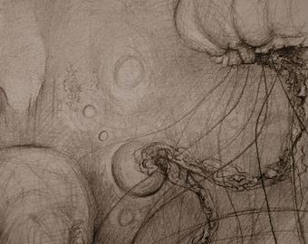 Original Jelly fish drawing