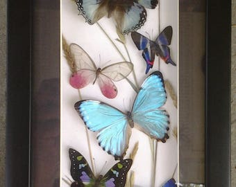 "Lovely Butterfly Collage by LIMMER - Custom Shadow Box 13 X 7"" ( O.D.)"