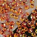 Flower Cup Sequins 5mm Tiny Dark Mustard Yellow & Crystal Gold AB Choose Pack Size
