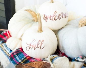 Real White Calligraphy Pumpkins for Fall or Thanksgiving