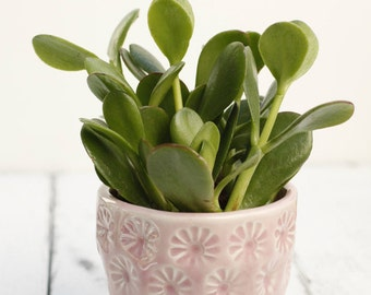pink planter with coaster