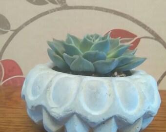 Geometric succulent/cacti planter
