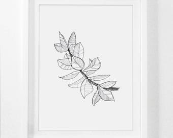 Pencil Drawing, Botanical Art, Autumn Leaves, Botanical Drawings, Sketch Art, Pencil Art, Leaf Art, Black and White Sketches, Framed Art
