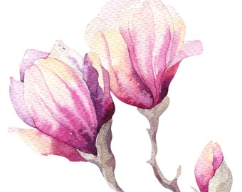 Magnolia wall art Watercolor Paintings, Magnolia Watercolors, Magnolia Print, Watercolor Flowers, Magnolia Painting ,botanical watercolor