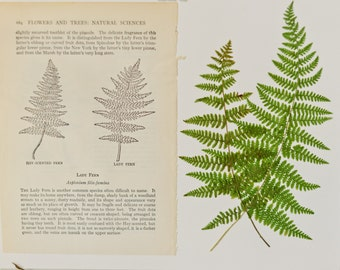 Real pressed fern with vintage guidebook page, 8x10"