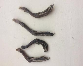 2 Dried Teal feet