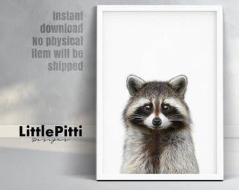 Raccoon Print, animal print, raccoon wall art, nursery animal print, animal photo prints, raccoon photo, raccoon nursery, baby room print