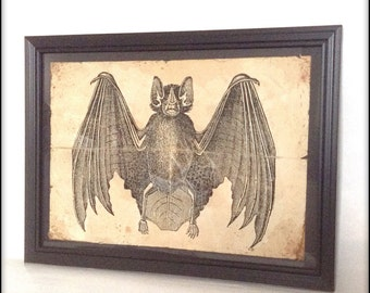 Aged reproduction Victorian bat illustration in frame.