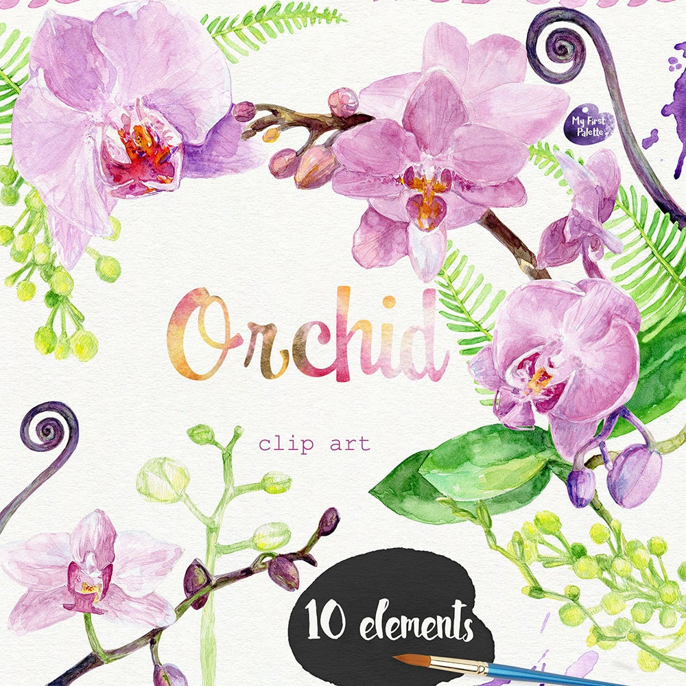 Watercolor Orchid clipart hand painted: high resolution 600