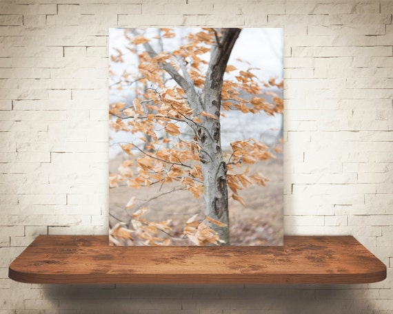 Blowing Leaves Fall Photograph - Fine Art Print - Fall Home Wall Decor - Tree Pictures - Orange - House Warming Gifts - Living Room