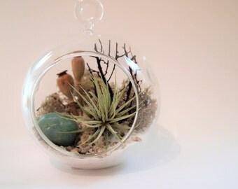 Amazonite Green Gemstone crystal air plant terrarium kit:unique gift; tillandsia; unique gift ;terrarium;office decor