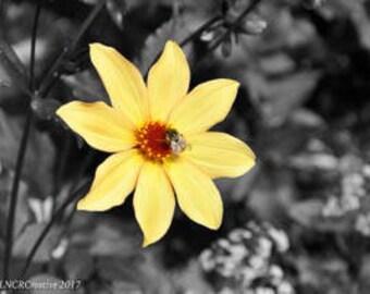 Yellow Flower Photo Unframed, Bee Print, Flowers, Fine Art Photograph, Garden Print, Spring Flowers, Nature Photography