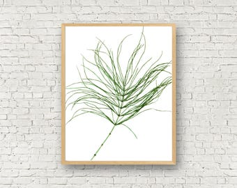 Horsetail - Herbarium Art Print - Equisetem - Pressed Plant Specimen - Botanical Print - 11X14 - 8X10 - Rustic Wall Decor - Eco Friendly Art