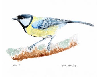 Great Tit Print - Mounted