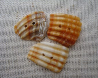 Shell buttons craft buttons-drilled 3-sea shells-italian sea buttons-hand made