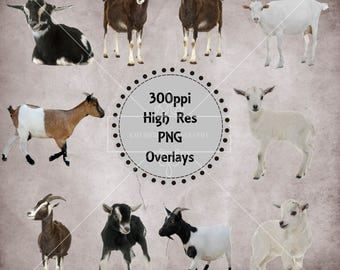 Goat / Kid Overlays, Separate Png Files, High Resolution, Instant Download.