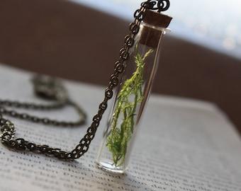 Glass bottle genuine green moss
