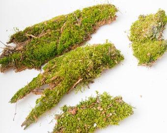 Moss on driftwood, small decorative moss, driftwood with moss, litter terrarium, moss green, lichen, home décor, natural materia