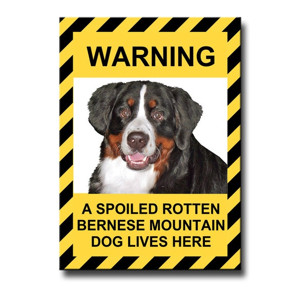 Bernese Mountain Dog Spoiled Rotten Funny Fridge Magnet