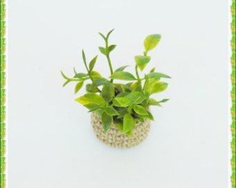 Dollhouse flowers, miniature plants, miniature flower, jute, planter, dollhouse plants,  miniature flowers, dollhouse miniatures