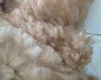 spinning fleece, raw alpaca fleece, 100% alpaca fleece, spinning fleece Australia