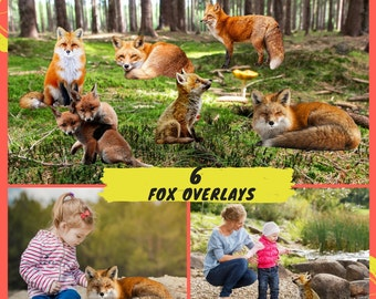 ON SALE, 6 Red Fox PNG Overlays, Animal Photoshop Overlays, Animals Clip Art, Nature Photo, Mammal Fox Clipart High resolution Overlays
