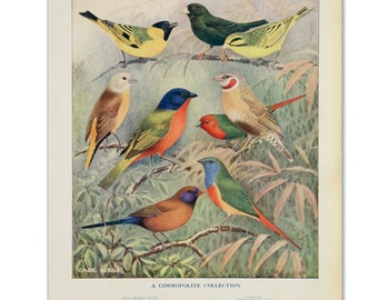 A3 Bird Print Wall Art - Cosmopolite Collection (Print #5)