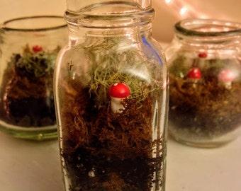 Mini Honey Jar terrarium