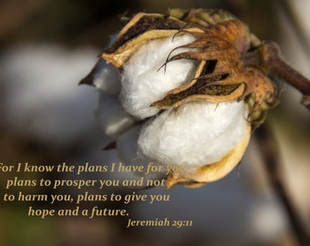 Jeremiah 29:11 on Cotton photograph