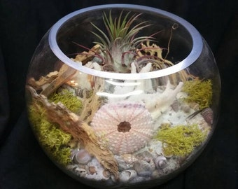Beach theme air plant fishbowl terrarium