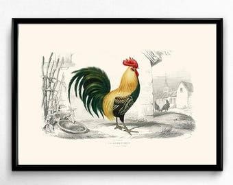 Rooster Vintage Print - Rooster Poster - Rooster Art - Kitchen Room Decor - Kitchen Room Art - Orbigny