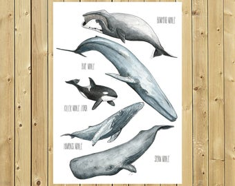 Poster whales, sheet A4 or A3, illustration in watercolor Poster