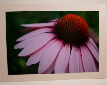 Echinacea Flower Photo Greeting Card
