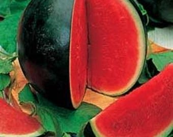 100 SUGAR BABY WATERMELON Citrullus lanatus Fruit Melon Seeds