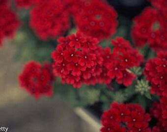 Flowers Print